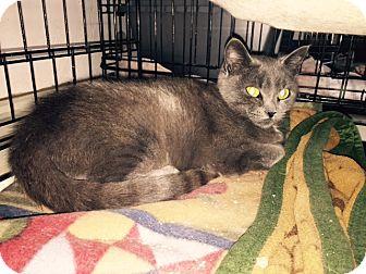 Domestic Shorthair Cat for adoption in Alden, Iowa - Iris