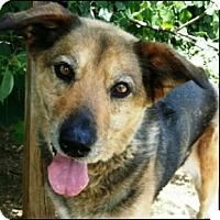 Shepherd (Unknown Type) Mix Dog for adoption in Shreveport, Louisiana - Bonnie