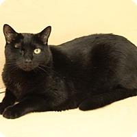 Adopt A Pet :: Dante - Van Nuys, CA