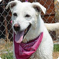 Adopt A Pet :: LILLY BELL - Liverpool, TX