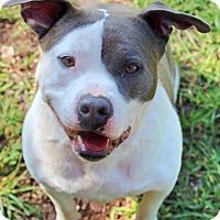Adopt A Pet :: Cupcake - Woodlyn, PA