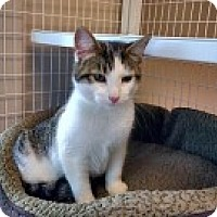 Adopt A Pet :: Nugget - McHenry, IL