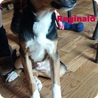 Adopt A Pet :: Reginald - Bartonsville, PA