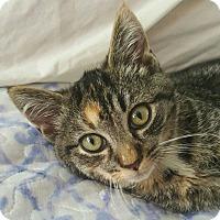 Adopt A Pet :: Penny - Raritan, NJ