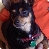 Adopt A Pet :: Dee - Odessa, TX