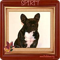 Adopt A Pet :: Spirit - Alabaster, AL