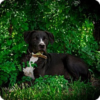Adopt A Pet :: Blaze - Weeki Wachee, FL