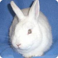 Adopt A Pet :: Poe - Woburn, MA