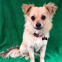 Adopt A Pet :: Spencer - Alta Loma, CA