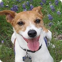 Adopt A Pet :: Morley in Austin - San Antonio, TX