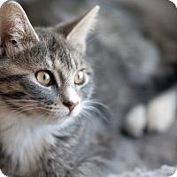 Adopt A Pet :: Julia - Dallas, TX