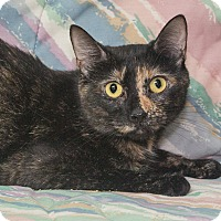 Adopt A Pet :: Roxie - Elmwood Park, NJ