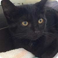 Adopt A Pet :: Velvet - Eureka, CA