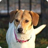 Adopt A Pet :: Vivian - Columbia, IL