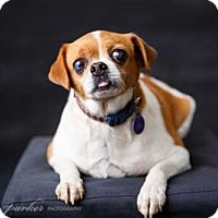 Adopt A Pet :: Theodore - Atlanta, GA
