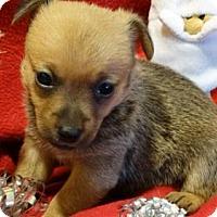 Adopt A Pet :: St. Nicolas - Vacaville, CA