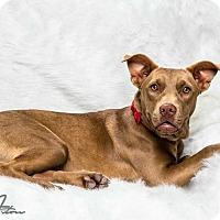 Adopt A Pet :: Ponyo - Dawson, GA