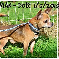 Adopt A Pet :: Little Man - Siler City, NC