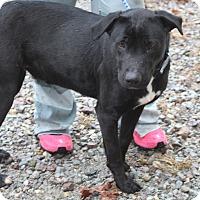 Adopt A Pet :: Aria ***URGENT*** - Columbia, TN