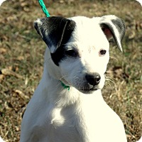 Adopt A Pet :: HOPE~Adopted - parissipany, NJ
