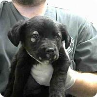 Adopt A Pet :: A283449 - Conroe, TX