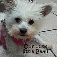 Adopt A Pet :: Beau - Midway City, CA