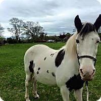 Adopt A Pet :: Bam's Cherokee Princess (CK) - Gallatin, TN