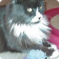 Adopt A Pet :: Grant - Reston, VA