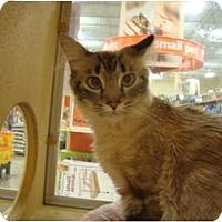 Adopt A Pet :: Arial - Owasso, OK