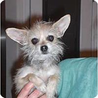 Adopt A Pet :: Gucci - Rescue, CA