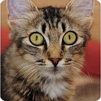 Adopt A Pet :: Kim - Scottsdale, AZ