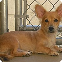 Adopt A Pet :: Rufus - Wickenburg, AZ