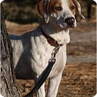 Adopt A Pet :: Sidney! - Toronto/Etobicoke/GTA, ON