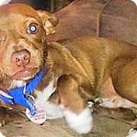 Adopt A Pet :: Theotis - Scottsdale, AZ