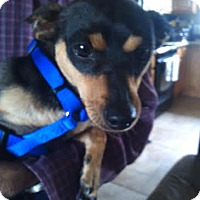 Adopt A Pet :: Eddy - Kirkland, WA