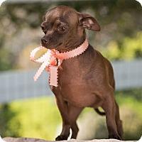 Adopt A Pet :: Brandy - Sherman Oaks, CA