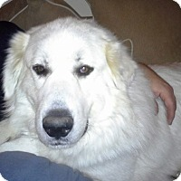 Adopt A Pet :: Lacey ADOPTED - Bloomington, IL