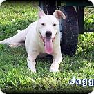Adopt A Pet :: Jagger NO ADOPT FEE - Sherman, CT