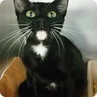 Adopt A Pet :: Morgana - Carencro, LA