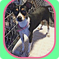 Adopt A Pet :: Sugar - Milton, GA