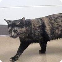 Adopt A Pet :: Karma #150044 - Apple Valley, CA