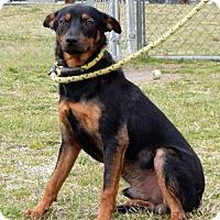 Adopt A Pet :: FREDDIE ~ READ UPDATE - Hanover, PA