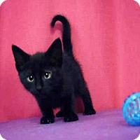 Adopt A Pet :: *BONGO - Sugar Land, TX