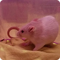 Adopt A Pet :: Aurora & Rose - Dallas, TX