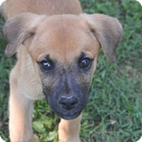 Adopt A Pet :: Moca~ meet me! - Glastonbury, CT