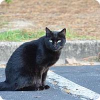 Adopt A Pet :: Oliver 161078 - Atlanta, GA