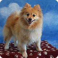 Adopt A Pet :: Chantilly - Dallas, TX