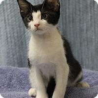 Adopt A Pet :: Henry - Seminole, FL