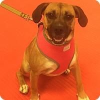 Adopt A Pet :: Sayla - Thomasville, NC