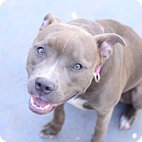 Adopt A Pet :: Mercy - Port Charlotte, FL